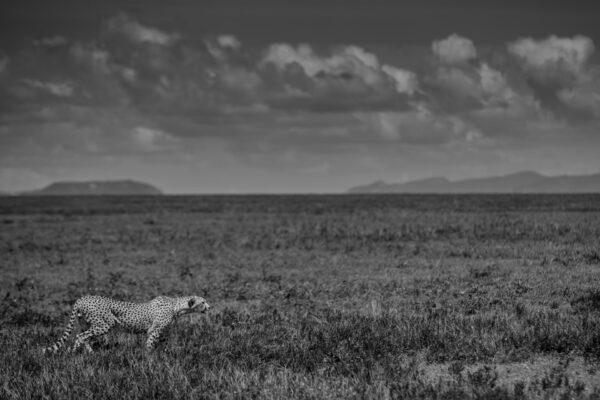 Sametu_Wildlife_01-min