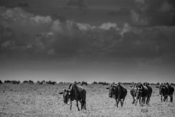 Sametu_Wildlife_06-min