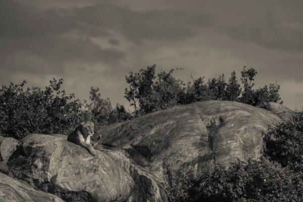 Sametu_Wildlife_08-min