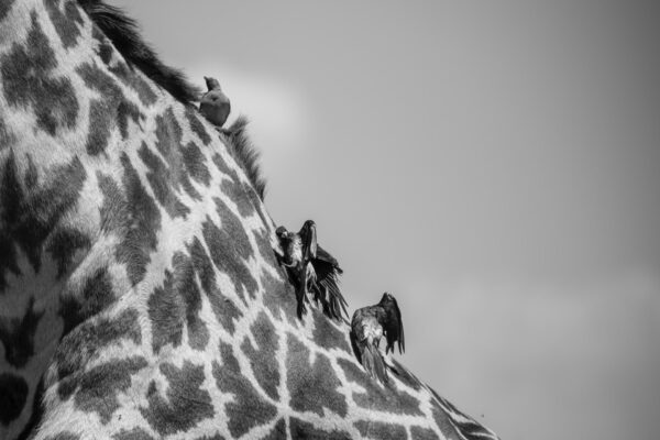 Sametu_Wildlife_19-min